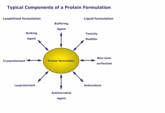 Protein-excipient interactions evaluated via NMR studies in