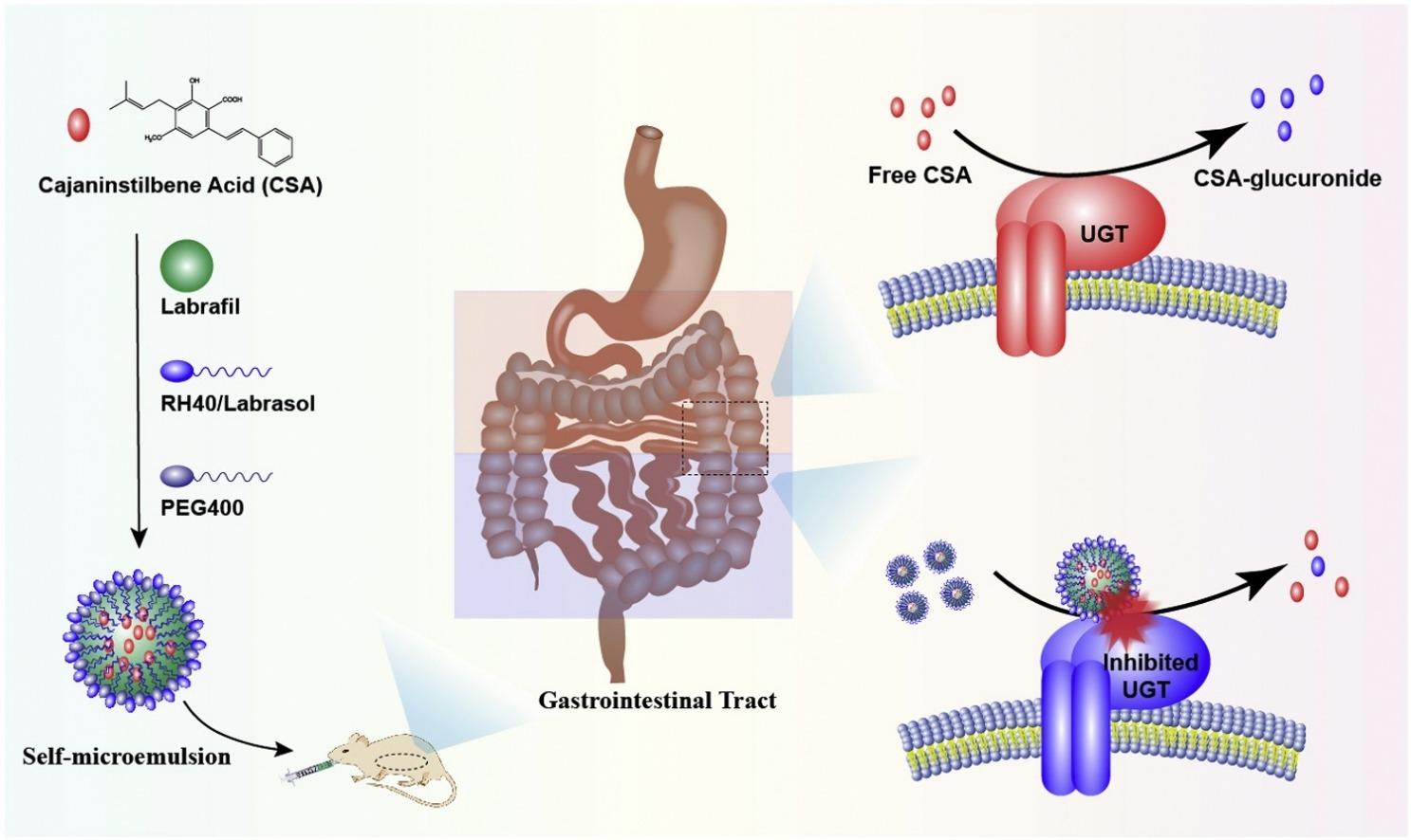 Enhancing in vivo oral bioavailability of cajaninstilbene acid using  UDP-glucuronosyl transferase inhibitory excipient containing  self-microemulsion | Pharma Excipients